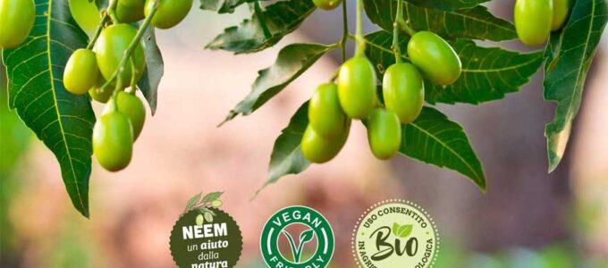 ¿Donde comprar aceite de Neem barato? Entra y te lo cuento